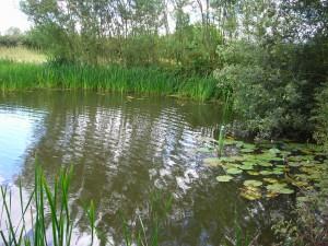 Hammersley Bottom Pool 2